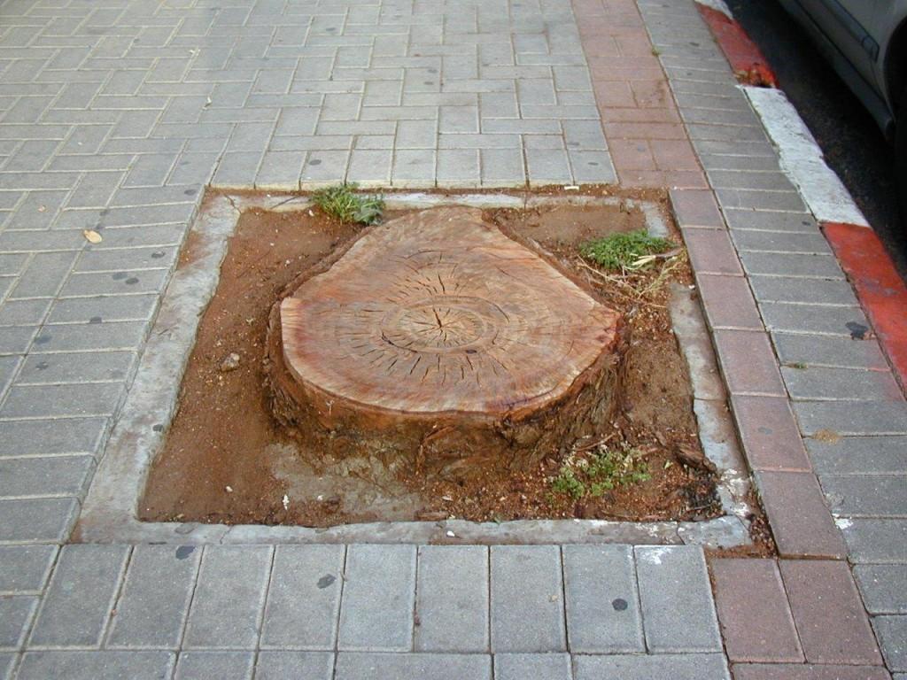 למרות התיקונים בחוק, מעמדם של עצים במרחב העירוני ממשיך להיות פגיע