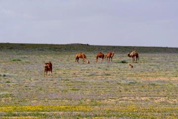 Negev Landscape photography: Pura Nature reserve.  תצלומי נוף בנגב: שמורת הטבע פורה.