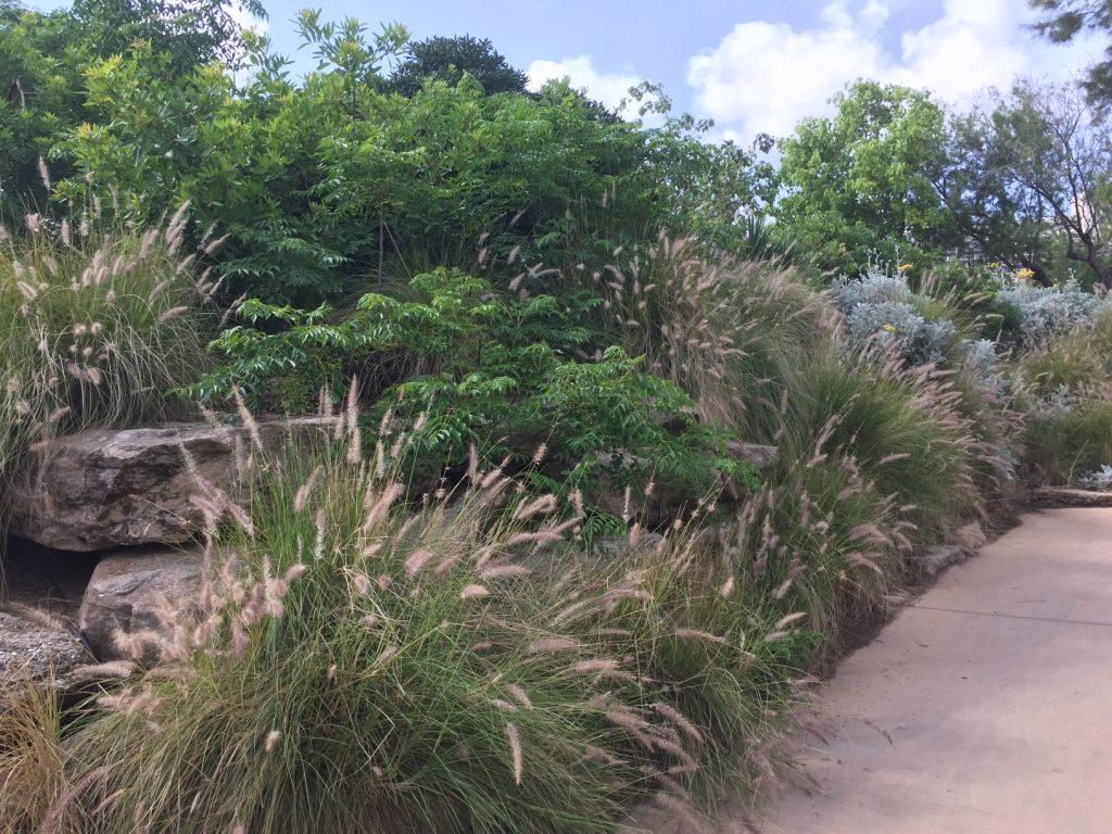 בתכנון הגן הושם דגש על שימוש בצמחייה המאפיינת את אזור החוף (צילום: בת אל אונגר)