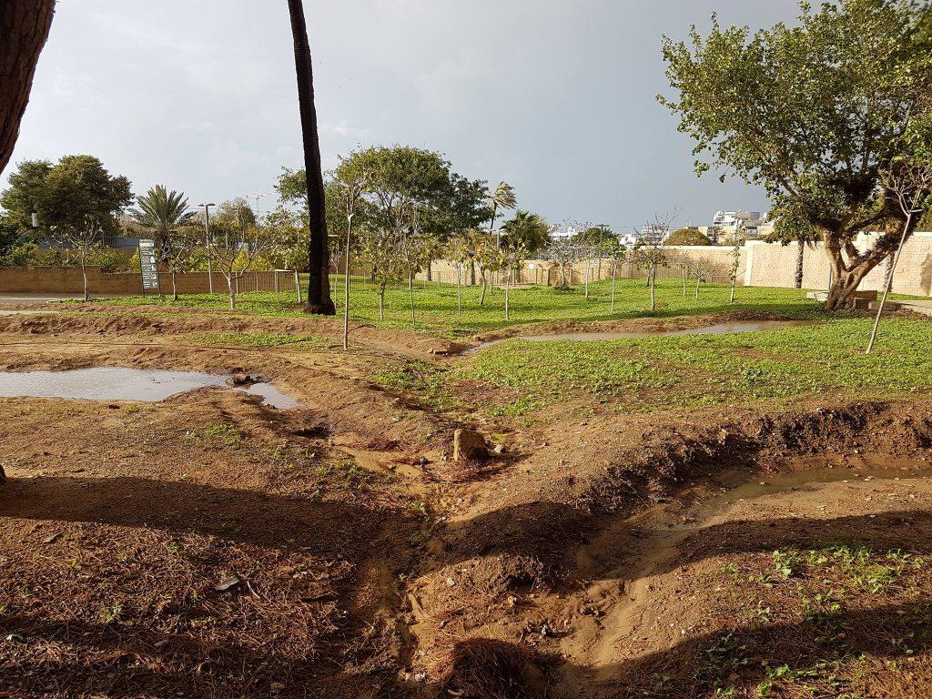שיקום אקולוגי של השטח בטכניקת שימור מי נגר וגשמים באמצעות סוויילים הפזרים את המים על פני השטח לחלחול איטי.  (צילום: אנדי איז'ק)