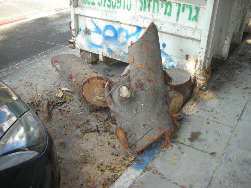 עצים כרותים ברחוב גנסין, תל אביב (צילום: יואב לרמן, flickr)