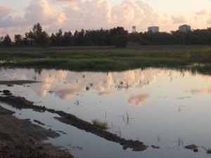 שלולית החורף, הבאסה, בהרצליה (צילום: יובל מנדלסון, אתר פיקיוויקי)